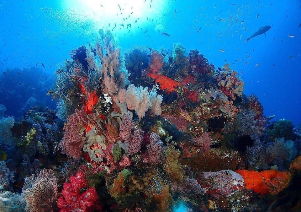 Best Dive Site in Raja Ampat