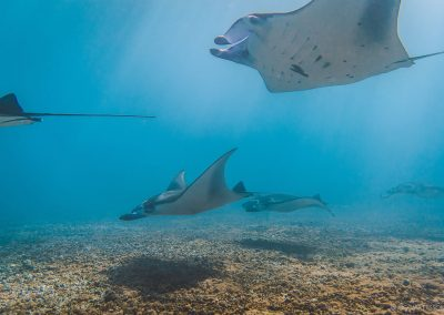 manta-point-diving-in-komodo-daytrip-budget-liveaboard-in-komodo