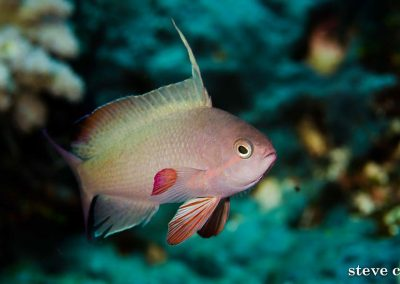 anthias-diving-komodo-budget-liveaboard-boat-trip
