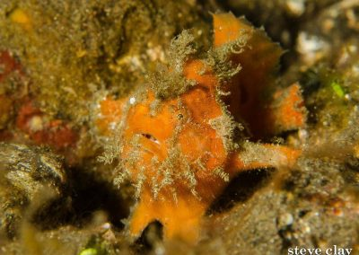 frogfish-komodo-diving-daytrip-budget-liveaboard