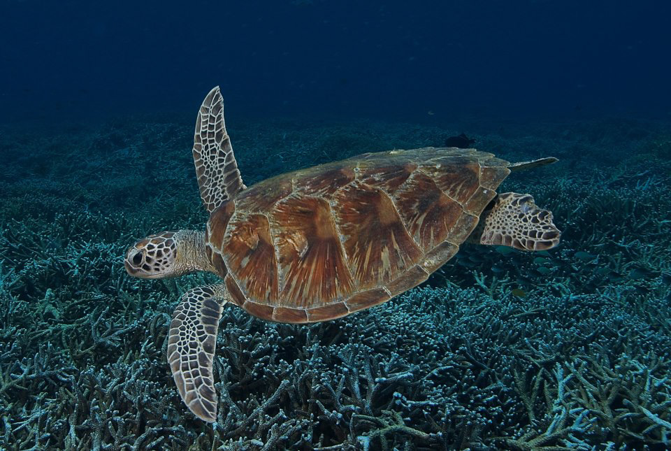 dive center labuan bajo turtle